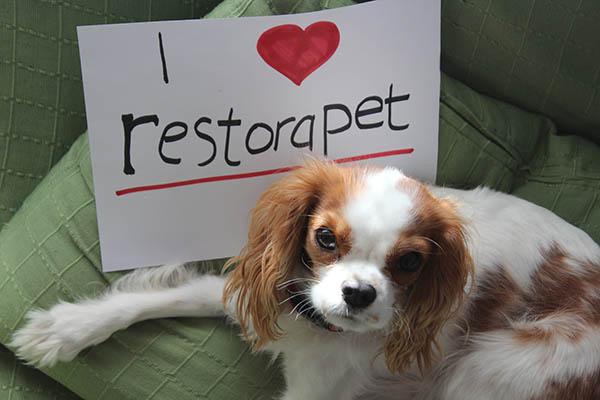 i love restorapet
