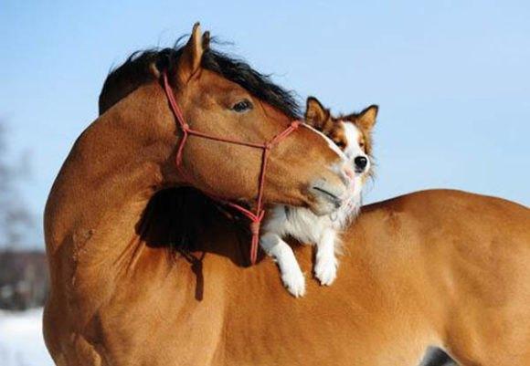 restorapet on horses