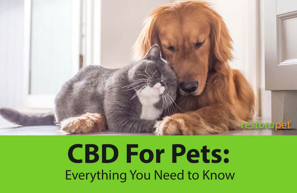 CBD For Pets: Everything You Need to Know