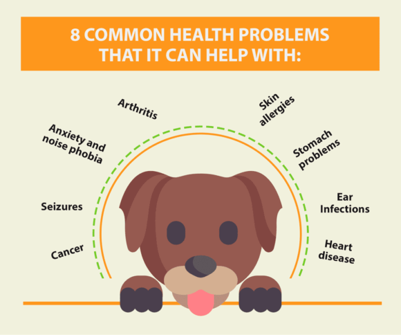 Common Pet Health Problems Treated With CBD