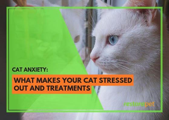 Featured image cat stress and anxiety