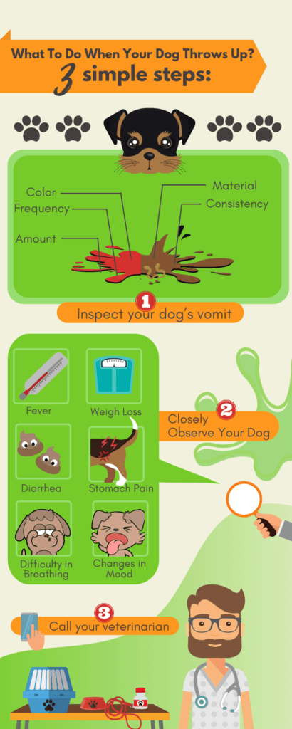 What Should I Do If My Dog Throws Up