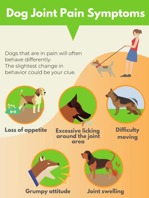 Dog joint pain symptoms